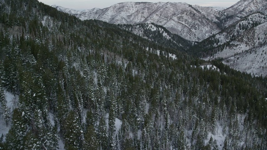 6K stock footage aerial video of flying low over snowy forest in the Wasatch Range at Utah Aerial Stock Footage | AX124_156