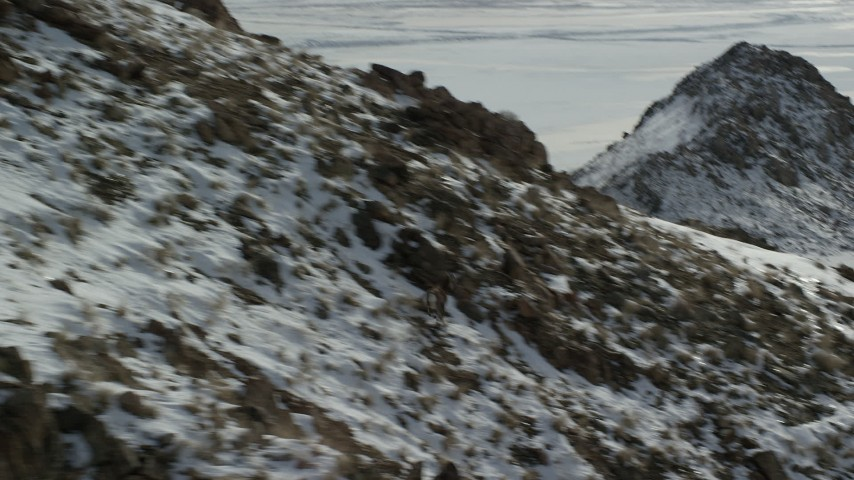 Track a Bighorn Sheep Racing across Rocks and Snow in Wintertime Aerial Stock Footage | AX125_068