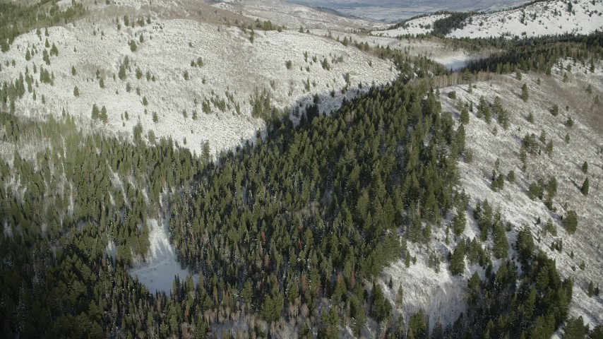 6K stock footage aerial video fly over evergreen snow forest in the Wasatch Range of Utah Aerial Stock Footage | AX126_284
