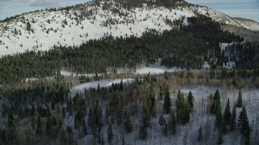 6K stock footage aerial video of flying over evergreen forest with winter snow in Utah's Wasatch Range Aerial Stock Footage | AX126_287