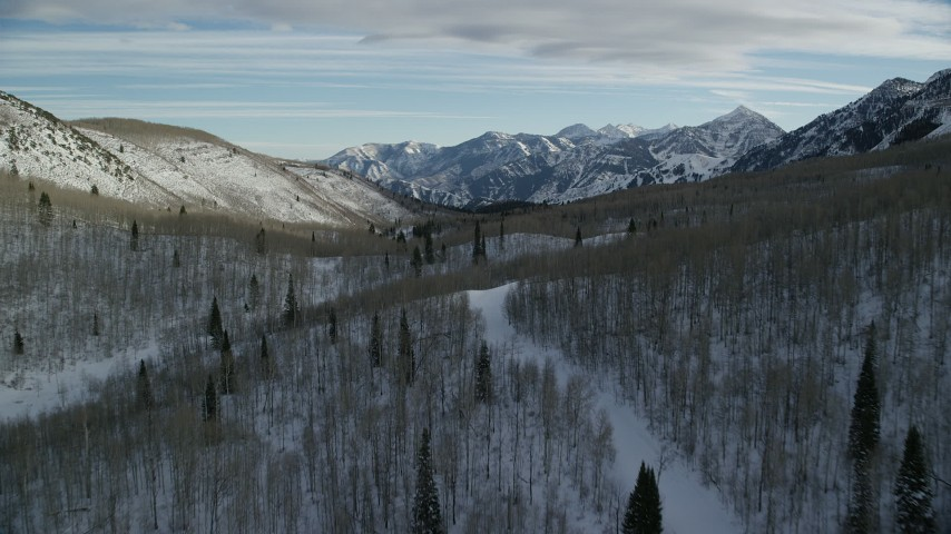 Fly Over Leafless Trees in a Winter Forest in the Mountains Aerial Stock Footage   AX126_289