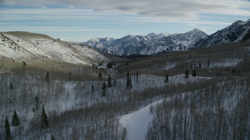 6K stock footage aerial video fly over leafless trees in a winter forest in the mountains, Wasatch Range, Utah Aerial Stock Footage | AX126_289