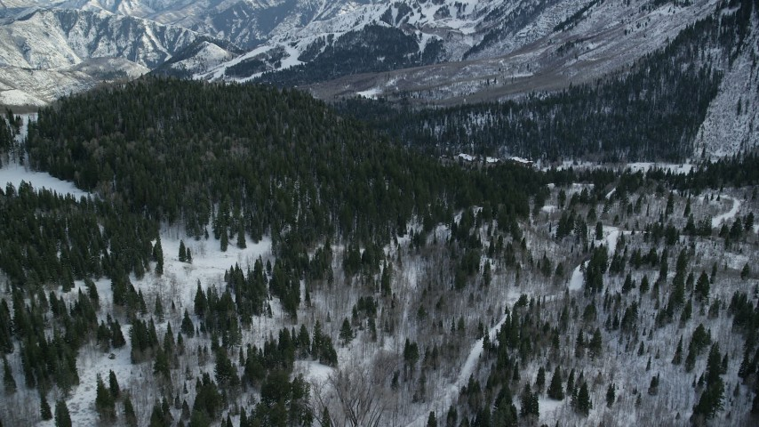 Approach Evergreens on a Slope with Winter Snow Aerial Stock Footage   AX126_293
