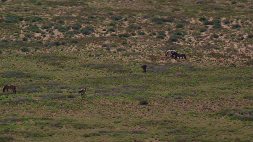 6K stock footage aerial video of circling grazing horses in a desert valley, Monument Valley, Utah, Arizona Aerial Stock Footage | AX135_097