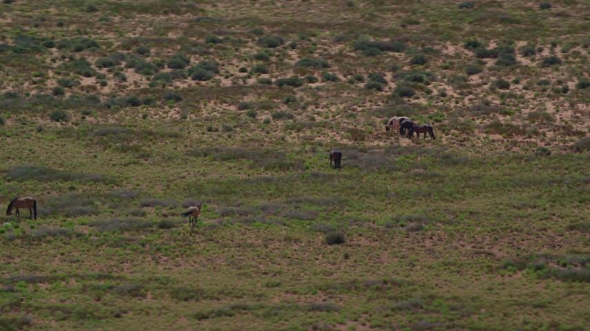 Orbiting grazing horses in a desert valley, Monument Valley, Utah, Arizona Aerial Stock Footage | AX135_097