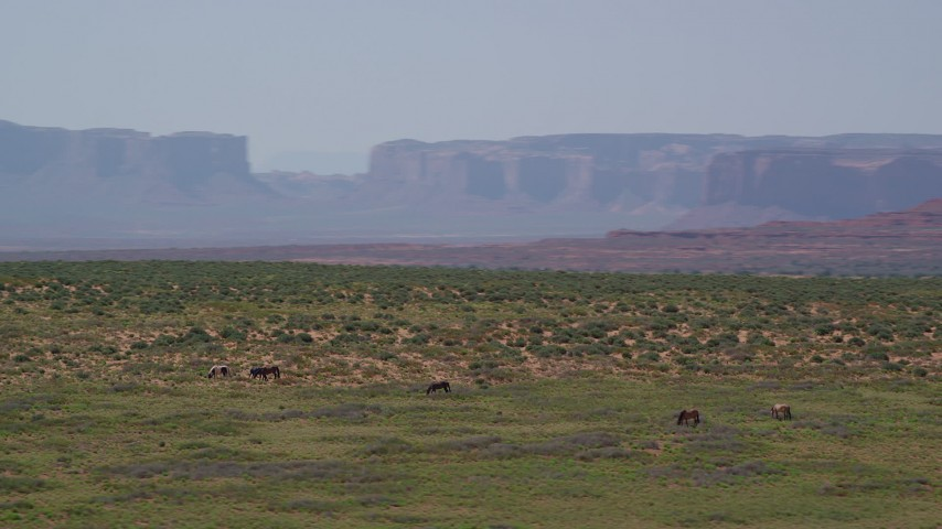 Orbiting grazing horses, giant buttes in background, Monument Valley, Utah, Arizona Aerial Stock Footage AX135_098