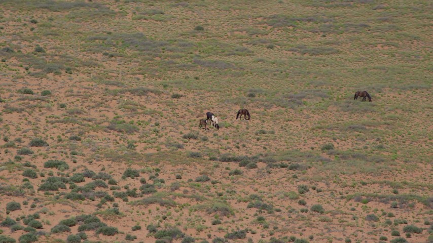 6K stock footage aerial video of grazing horses in a desert valley, Monument Valley, Utah, Arizona Aerial Stock Footage | AX135_100