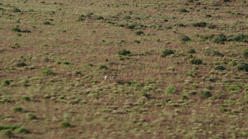 6K stock footage aerial video of tracking pronghorn running through desert near Moab, Utah Aerial Stock Footage | AX138_217