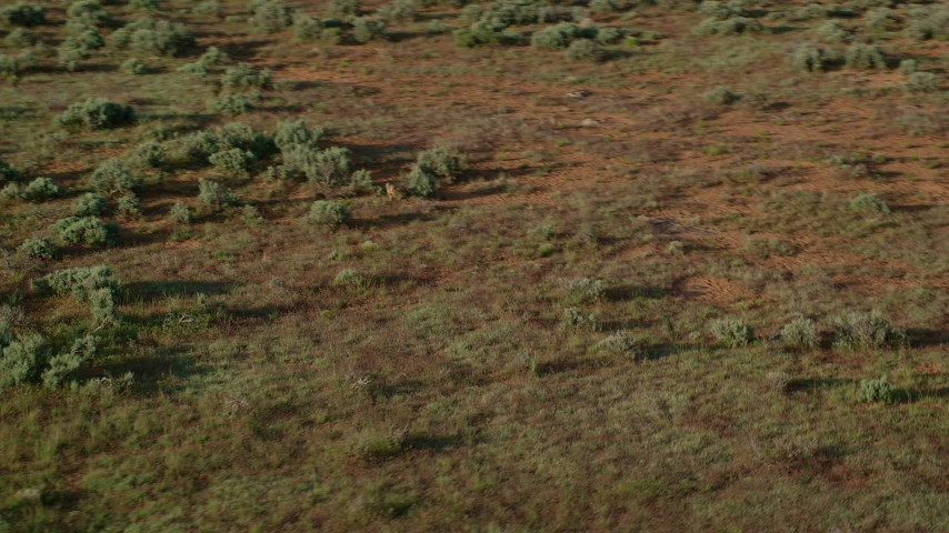 Track a Coyote Running through Desert near Moab, Utah Aerial Stock Footage | AX138_225