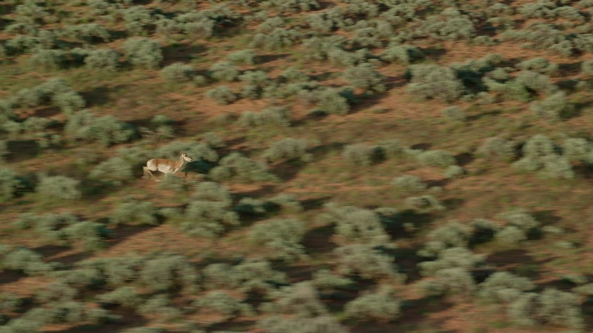 6K stock footage aerial video track and zoom in on pronghorn running through desert near Moab, Utah Aerial Stock Footage | AX138_233