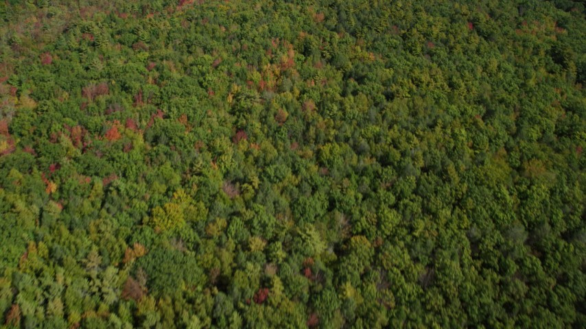 6k stock footage aerial video of a bird's eye view of a colorful, dense forest in autumn, Kittery, Maine Aerial Stock Footage | AX147_228