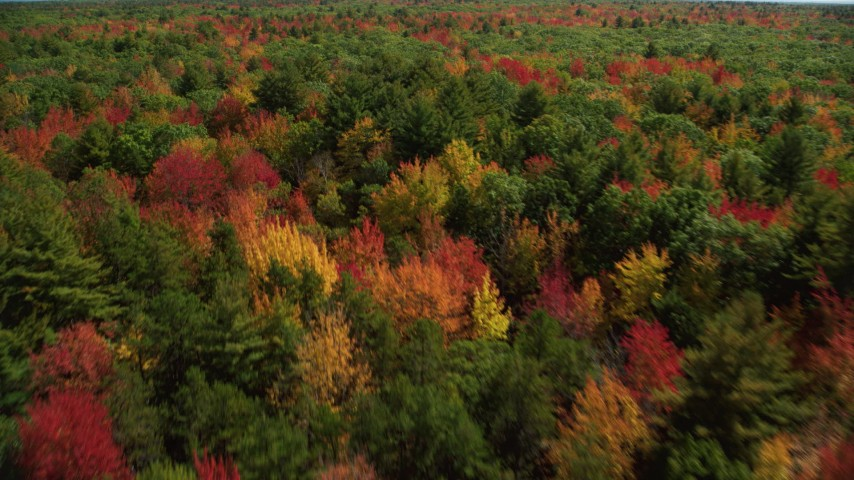 6k stock footage aerial video flying over a colorful forest in autumn, pan left, Biddeford, Maine Aerial Stock Footage | AX147_281