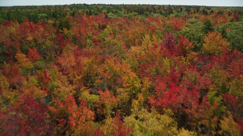 6k stock footage aerial video flying over a colorful forest in autumn, Biddeford, Maine Aerial Stock Footage AX147_284