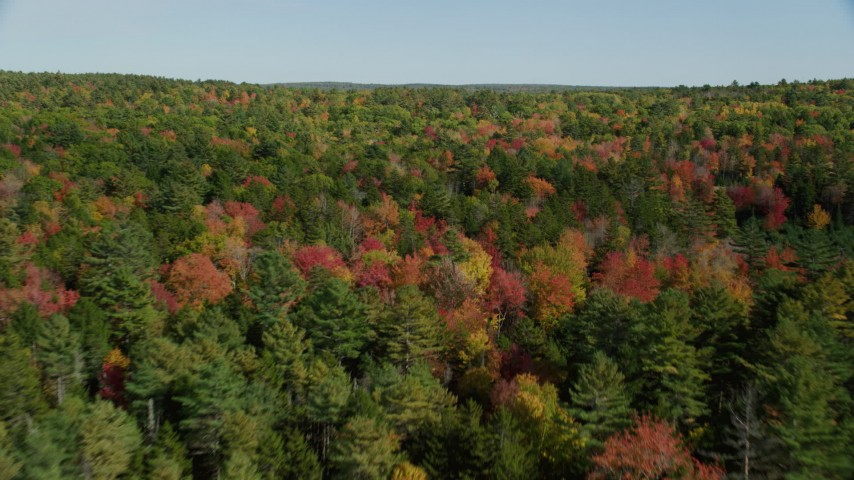 6k stock footage aerial video flying over a colorful forest in autumn, Newcastle, Maine Aerial Stock Footage | AX148_013