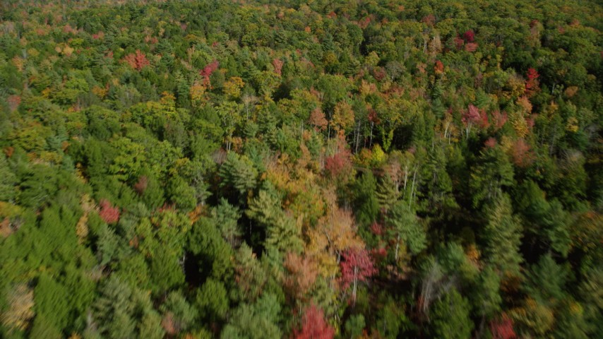 6k aerial video flying over a colorful forest in autumn, Damariscotta, Maine Aerial Stock Footage | AX148_020