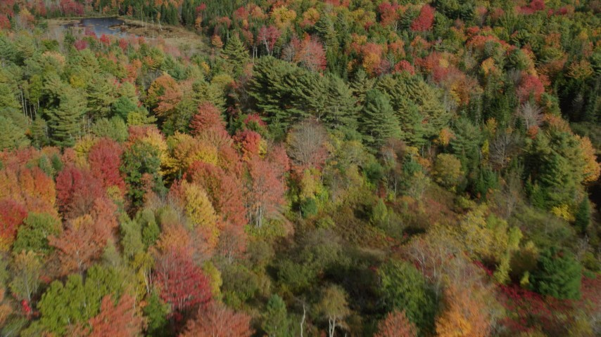 6k stock footage aerial video flying over a colorful forest, marsh, pond, autumn, Cushing, Maine Aerial Stock Footage | AX148_047