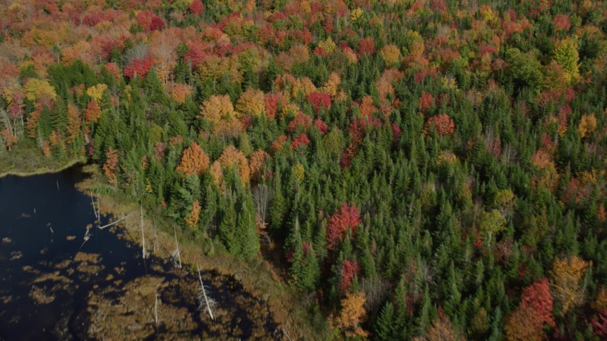 6k stock footage aerial video of a bird's eye view flying over colorful forest, autumn, Cushing, Maine Aerial Stock Footage | AX148_048