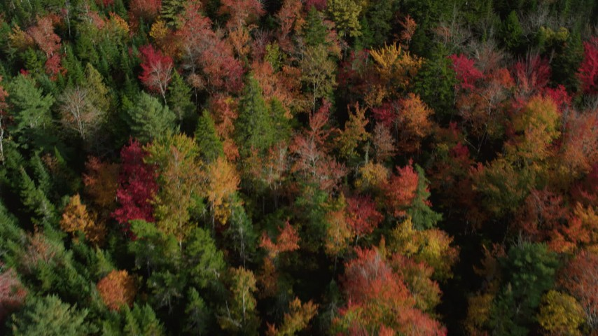 6k stock footage aerial video of a bird's eye view flying over a colorful forest, autumn, Cushing, Maine Aerial Stock Footage | AX148_050