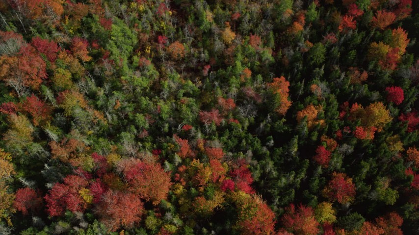 6k stock footage aerial video of a bird's eye view flying over a colorful forest in autumn, Cushing, Maine Aerial Stock Footage | AX148_052