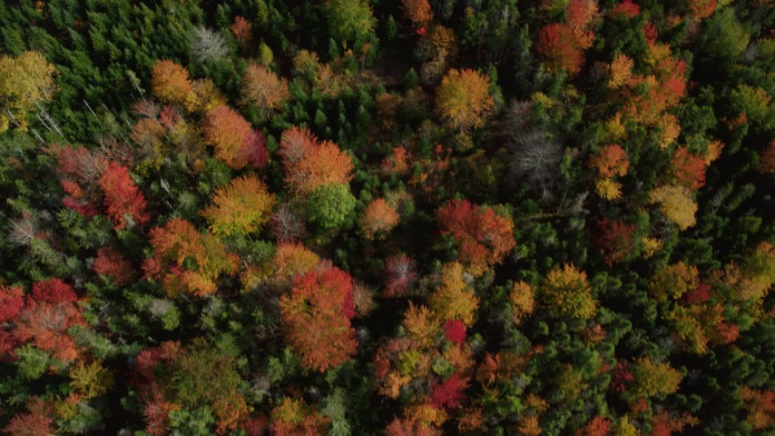 6k aerial video of a bird's eye view flying over colorful evergreen forest, autumn, Cushing, Maine Aerial Stock Footage | AX148_053