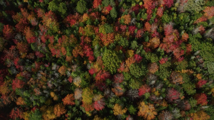 6k stock footage aerial video of a bird's eye view flying over colorful trees in autumn, Cushing, Maine Aerial Stock Footage | AX148_055