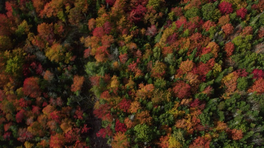 6k aerial video of a bird's eye view flying over a colorful forest, autumn, Cushing, Maine Aerial Stock Footage | AX148_058