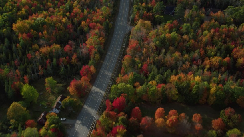 Bird's eye of road among forest with fall foliage, Bar Harbor, Maine Aerial Stock Footage | AX148_232
