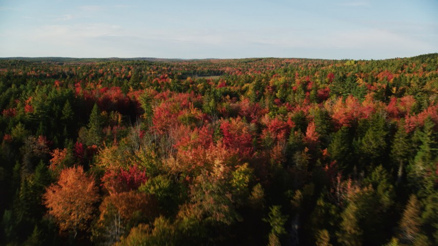 6K stock footage aerial video flying low over forest with colorful trees and evergreens, autumn, Blue Hill, Maine Aerial Stock Footage | AX149_039
