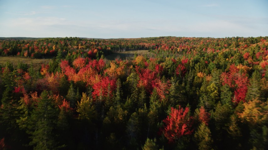 6K stock footage aerial video flying low over colorful fall forest, Blue Hill, Maine Aerial Stock Footage | AX149_040