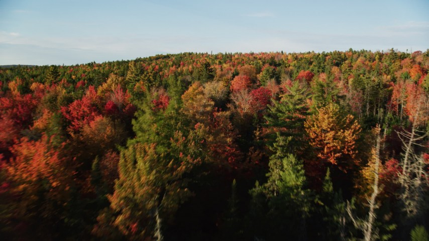 6K stock footage aerial video flying over colorful foliage in a forest, Blue Hill, Maine Aerial Stock Footage | AX149_043
