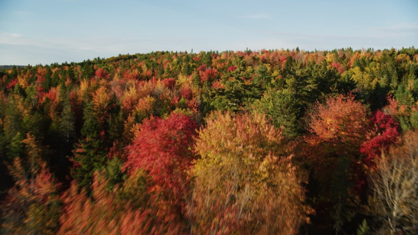 6K stock footage aerial video flying over a forest with colorful trees in autumn, Blue Hill, Maine Aerial Stock Footage AX149_044 | Axiom Images
