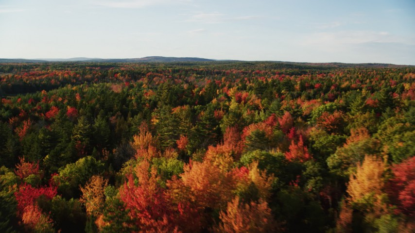 6K stock footage aerial video flying over colorful fall trees in a forest, autumn, Blue Hill, Maine Aerial Stock Footage | AX149_045