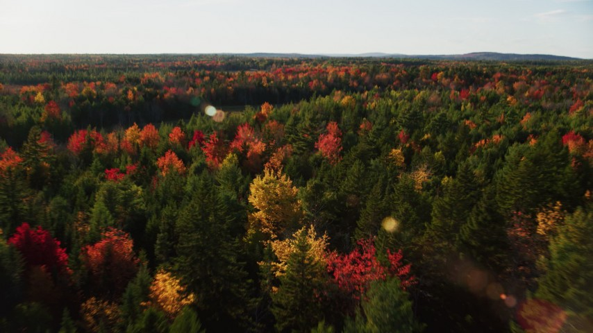 6K stock footage aerial video flying over colorful fall forest toward a clearing, autumn, Blue Hill, Maine Aerial Stock Footage | AX149_046