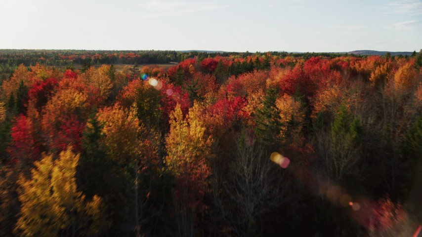 6K aerial video flying low over colorful trees and evergreens toward a clearing, Blue Hill, Maine Aerial Stock Footage | AX149_047