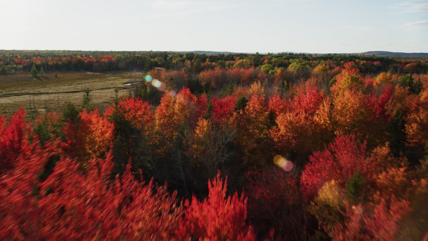 6K stock footage aerial video flying over a forest with colorful trees toward a clearing, autumn, Blue Hill, Maine Aerial Stock Footage   AX149_048