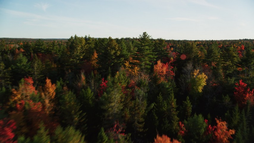 6K stock footage aerial video flying over forest of evergreens and fall foliage, autumn, Blue Hill, Maine Aerial Stock Footage | AX149_052