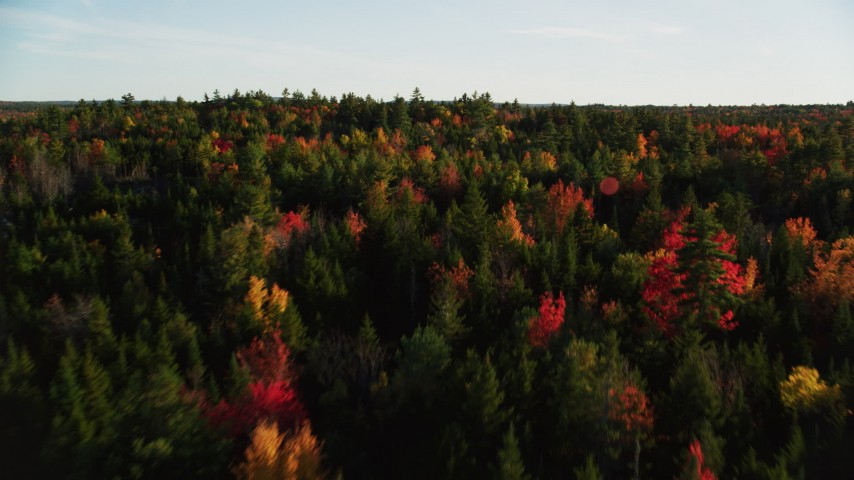 6K stock footage aerial video flying over colorful fall forest, Blue Hill, Maine Aerial Stock Footage | AX149_054