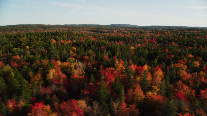 6K stock footage aerial video flying along evergreens among colorful forest in autumn, Blue Hill, Maine Aerial Stock Footage | AX149_055
