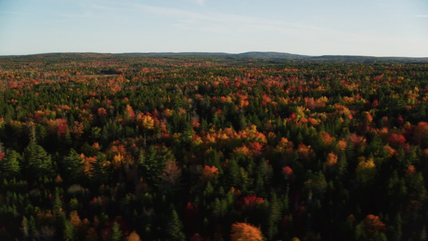 6K stock footage aerial video flying by colorful trees in a forest in autumn, Blue Hill, Maine Aerial Stock Footage | AX149_056