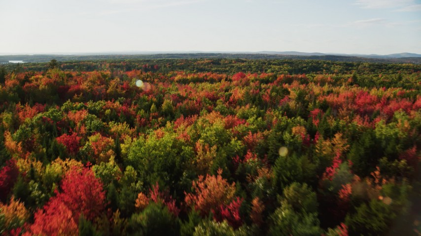 6K stock footage aerial video flying low over a forest with colorful foliage in autumn, Blue Hill, Maine Aerial Stock Footage | AX149_059