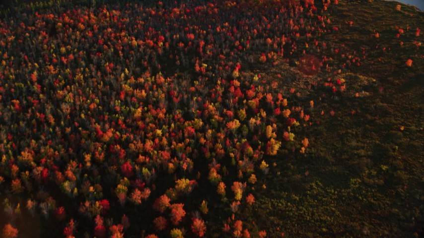 6K stock footage aerial video of a bird's eye view of colorful forest in autumn, Belmont, Maine, sunset Aerial Stock Footage AX149_171 | Axiom Images