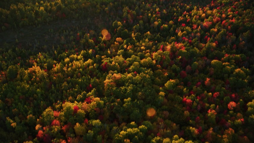 6K aerial video of a bird's eye view flying over brightly colored forest in autumn, Searsmont, Maine, sunset Aerial Stock Footage | AX149_185