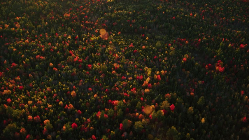 6K aerial video of a bird's eye view over forest, autumn, Searsmont, Maine, sunset Aerial Stock Footage | AX149_186