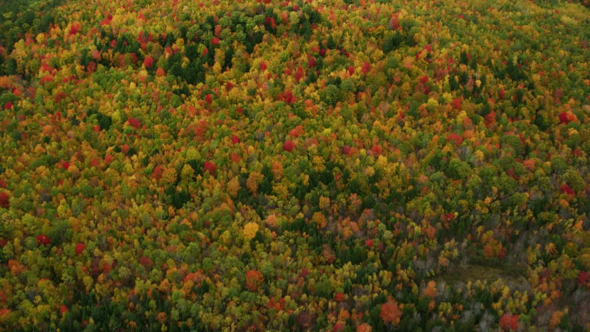 6K stock footage aerial video of a bird's eye view flying over dense, colorful forest in autumn, Norway, Maine Aerial Stock Footage | AX150_112