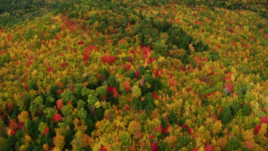 6K stock footage aerial video of a bird's eye view flying over a brightly colored forest in autumn, Norway, Maine Aerial Stock Footage | AX150_113
