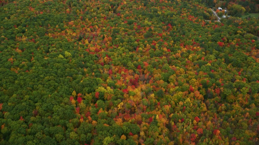 6K aerial video of a bird's eye view flying over dense, brightly colored forest, autumn, Lovell, Maine Aerial Stock Footage | AX150_136