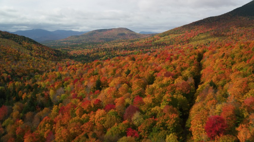 6K stock footage aerial video flying over bright forest in autumn, approaching White Mountains, New Hampshire Aerial Stock Footage | AX150_159