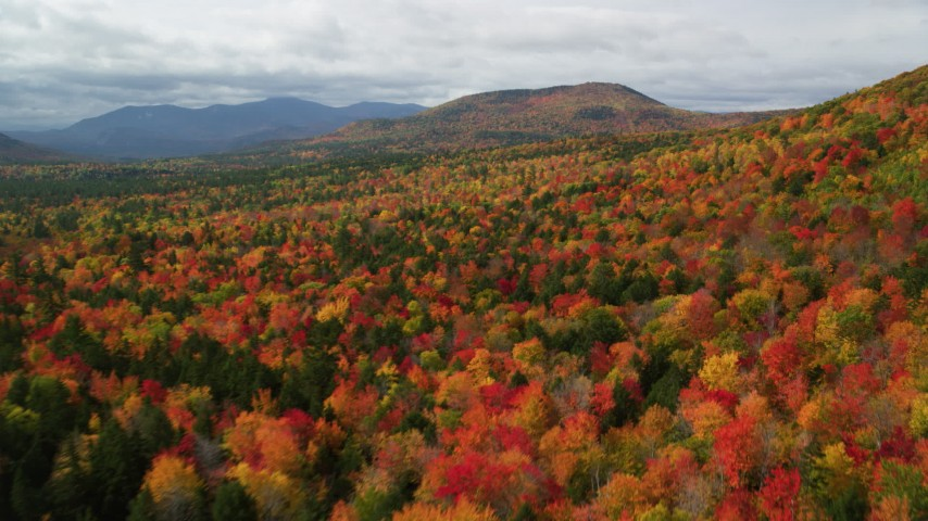 6K stock footage aerial video flying over dense forest, autumn, approaching White Mountains, New Hampshire Aerial Stock Footage | AX150_161