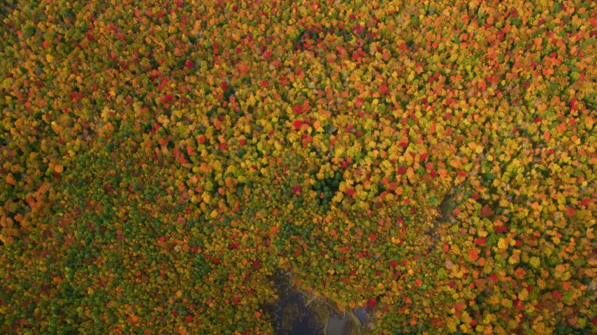 6K stock footage aerial video of a bird's eye view of pond, colorful forest, autumn, White Mountains, New Hampshire Aerial Stock Footage | AX150_189
