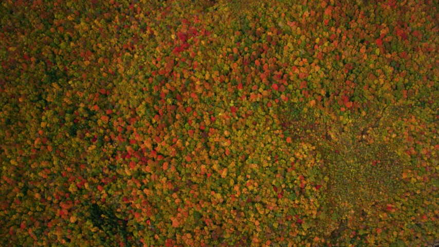 6K stock footage aerial video of a bird's eye view over colorful forest, autumn, White Mountains, New Hampshire Aerial Stock Footage | AX150_191